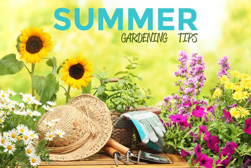 Donnellys garden supplies - Summer time gardening tips ...